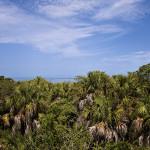 Landscape, Florida