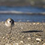 One Leg Bird, Florida